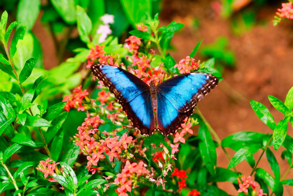 Jardín de Mariposas
