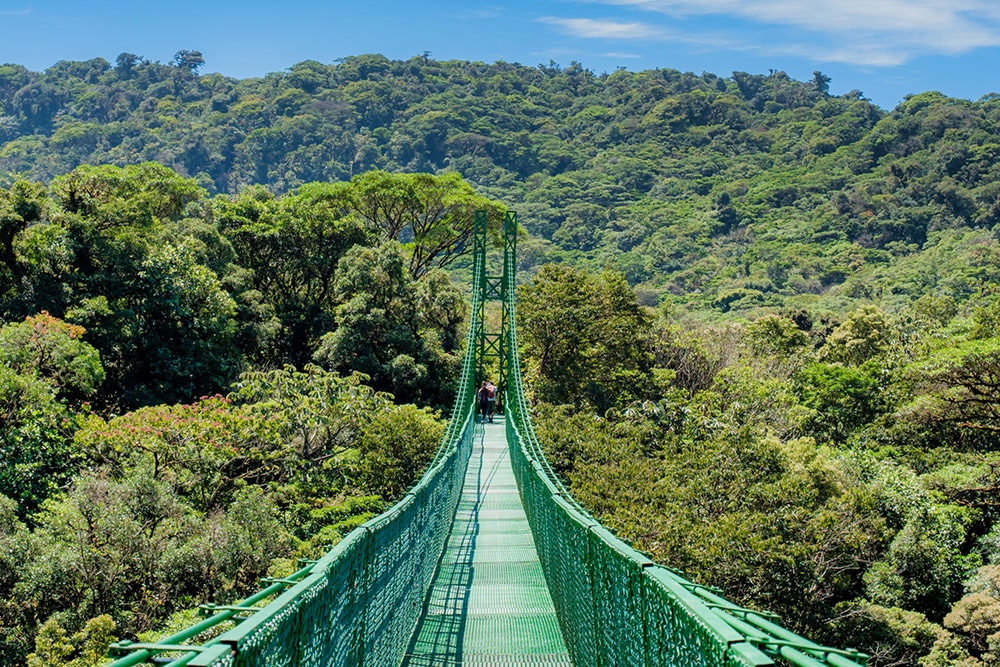 Treetop Walkways Suspension Bridges